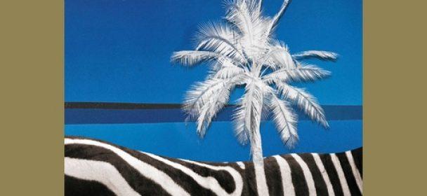 Black Tropics (CH) – Black Tropics