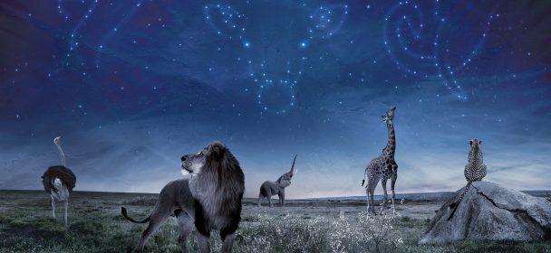 PATTERN-SEEKING ANIMALS (USA) – Pattern-Seeking Animals