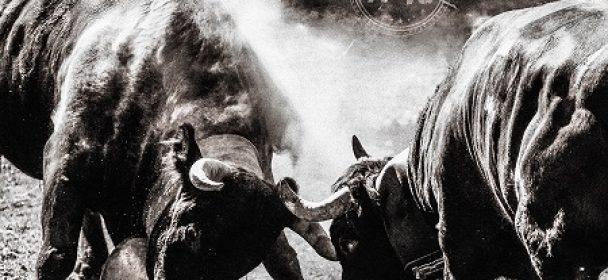 """News: GOTTHARD – kündigen neues Album """"#13"""" an!"""