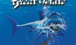 Jack Russell's Great White (USA) – Once Bitten Acoustic Bytes