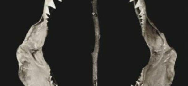 "News: BALA – ANNOUNCE NEW ALBUM; REVEAL COVER-ARTOWRK & RELEASE VIDEO TO ""AGITAR"""